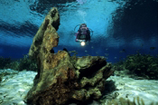 Photo: dd001193      Scenery Rainbow River and Diver , Florida, USA