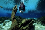 Photo: dd001194     Scenery Rainbow River and Diver , ,  Florida, USA