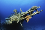 Photo: dd001200     Shipwreck Carnatic , ,  Sha'ab Abu Nuhas, Red Sea, Egypt