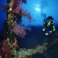 Photo: dd001205     Shipwreck SS Numidia and Diver , ,  Big Brother, Red Sea, Egypt