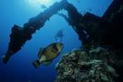 Photo: dd001218     Shipwreck Umbria and Titan Triggerfish , Balistoides viridescens,  Wingate Reef , Red Sea, Sudan
