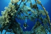 Photo: dd001233Precontinent II and Diver Sha'ab Rumi, Red Sea, Sudan