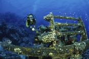 Photo: dd001245     Toyota shipwreck Blue Bell and Diver  , ,  Red Sea, Sudan