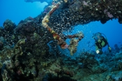 Photo: dd001248     Shipwreck Umbria and Diver , ,  Wingate Reef, Red Sea, Sudan