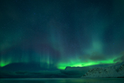 Photo: dd011205     Northern Lights , Aurora borealis,  Flakstad, Lofoten, Norway