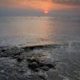 Photo: dd001998Horseshoe Crab , Limulus polyphemus,  Delaware Bay, Reeds Beach, New Jersey, Atlantic, USA